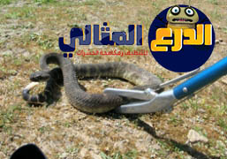 شركة مكافحة الثعابين بالرياض