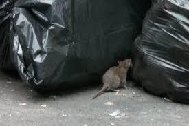 شركة مكافحة فئران بالرس