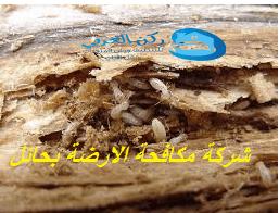 Photo of شركة مكافحة الارضة بحائل 0533942977