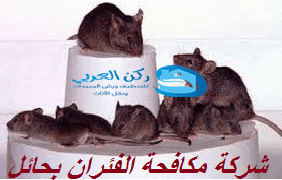 Photo of شركة مكافحة الفئران بحائل 0533942977