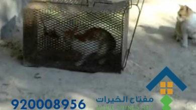Photo of افضل شركة صيد قطط جنوب الرياض 920008956