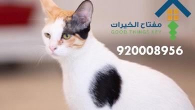 Photo of افضل شركة صيد قطط شرق الرياض 920008956