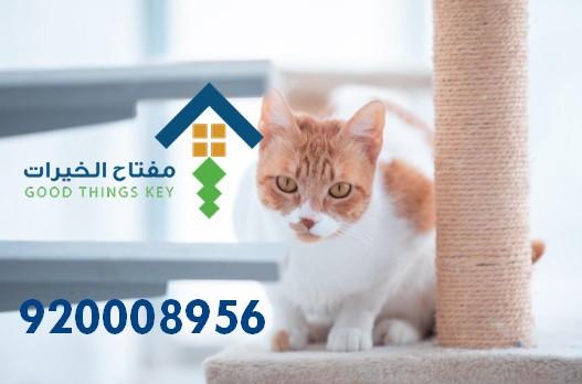 افضل شركة صيد قطط شرق الرياض 920008956