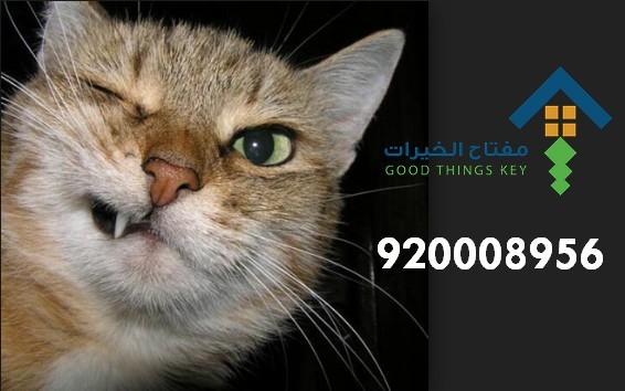 افضل شركة صيد قطط شمال الرياض 920008956