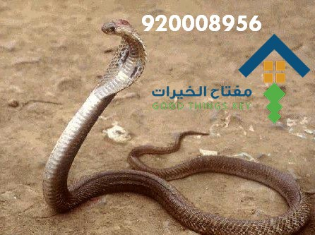 افضل شركة مكافحة الافاعي جنوب الرياض 920008956