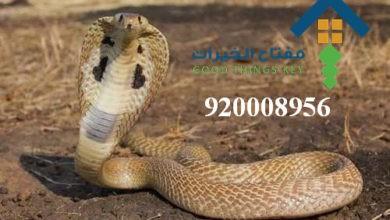 Photo of افضل شركة مكافحة الافاعي شرق الرياض 920008956