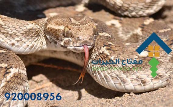 افضل شركة مكافحة الافاعي شمال الرياض 920008956