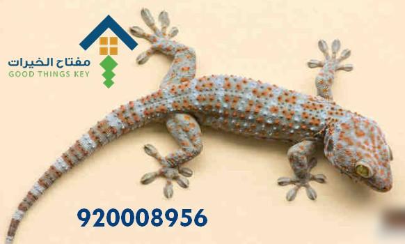 افضل شركة مكافحة البرص شرق الرياض 920008956