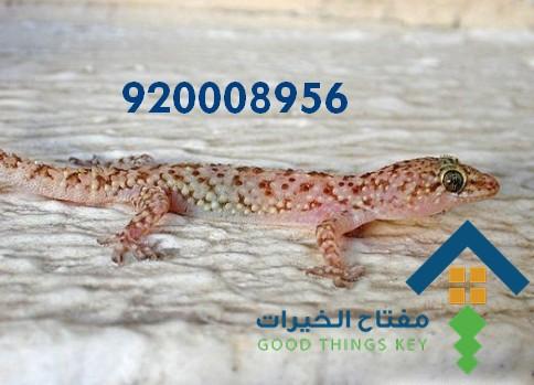 افضل شركة مكافحة البرص شمال الرياض 920008956