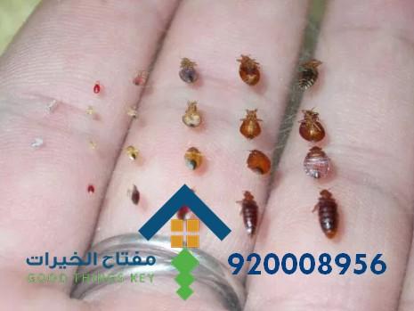 افضل شركة مكافحة البق جنوب الرياض 920008956
