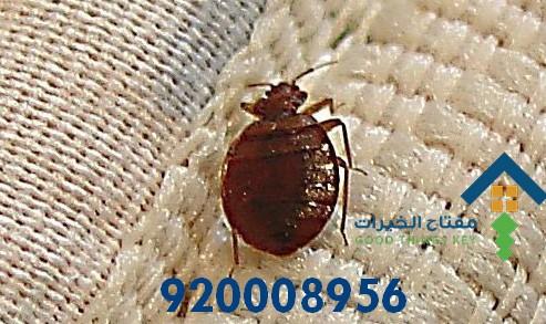 افضل شركة مكافحة البق غرب الرياض 920008956