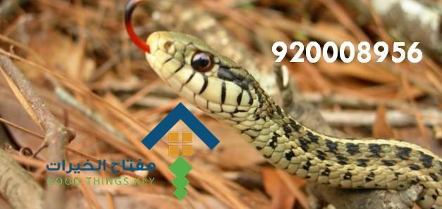 افضل شركة مكافحة الثعابين بالرياض 920008956