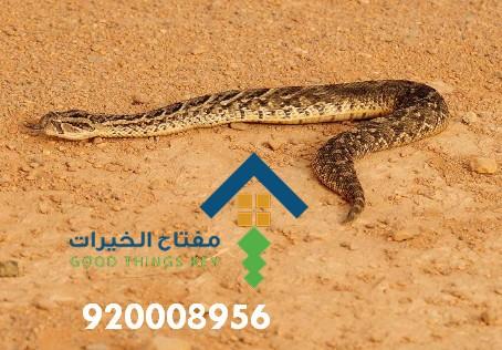 افضل شركة مكافحة الثعابين جنوب الرياض 920008956