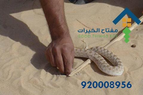 افضل شركة مكافحة الثعابين غرب الرياض 920008956