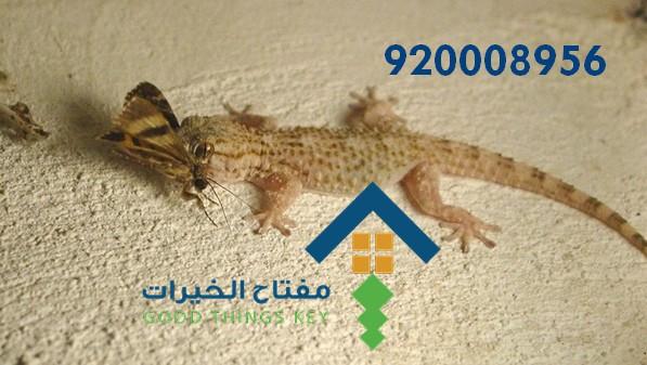 افضل شركة مكافحة الوزغ جنوب الرياض 920008956