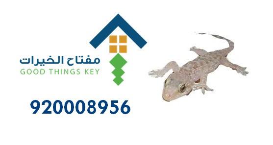 افضل شركة مكافحة الوزغ شمال الرياض 920008956