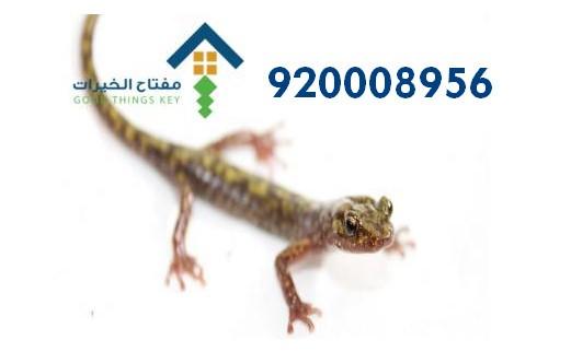افضل شركة مكافحة الوزغ غرب الرياض 920008956