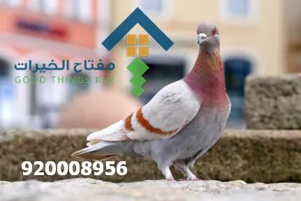 شركة طارد الحمام شرق الرياض 920008956