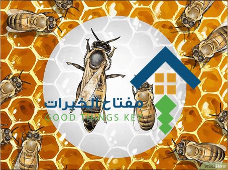 شركة مكافحة النحل جنوب الرياض