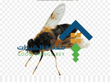 شركة مكافحة النحل غرب الرياض