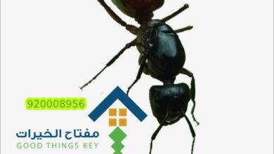 Photo of شركة مكافحة النمل الاسود الصغير 920008956