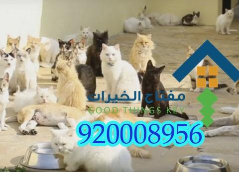 شركة مكافحة القطط الضالة بالرياض