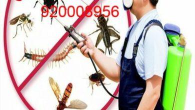 Photo of شركة رش مبيدات بالخرج 920008956