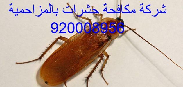 شركة مكافحة حشرات بالمزاحمية 920008956
