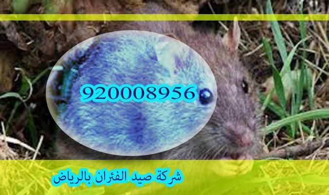 شركة صيد الفئران بالرياض
