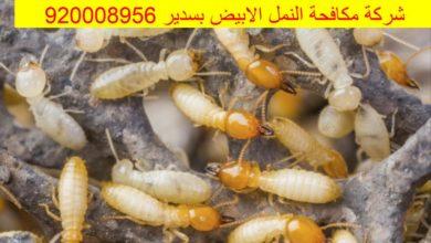 Photo of شركة مكافحة النمل الابيض بسدير 920008956