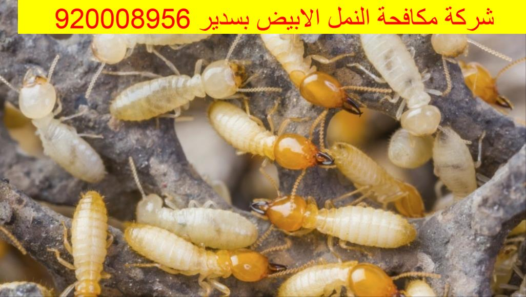 شركة مكافحة النمل الابيض بسدير