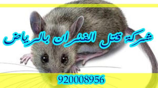 شركة قتل الفئران بالرياض